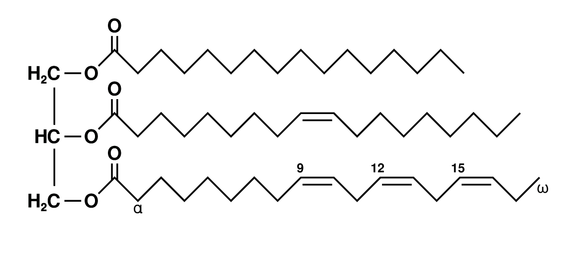 Example of Triglyceride